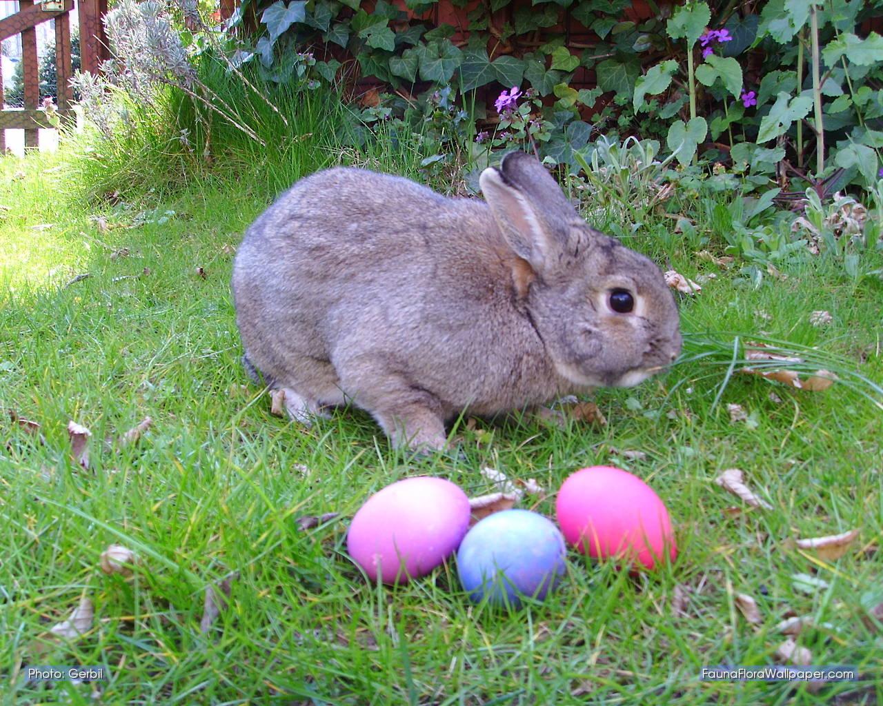 Funny Wallpaper Desktop: Easter Bunny Clip Art Pictures