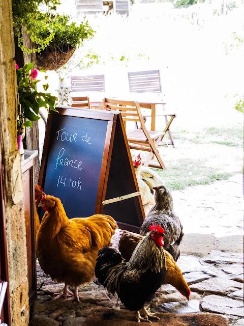 kippen op het terras