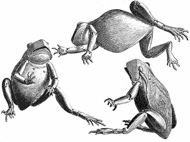 a mechanical toy frog illustrated in three positions, 1888 Japan