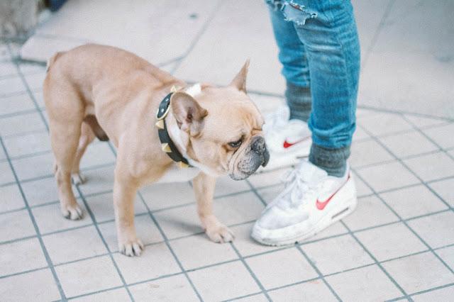 bezpłatne próbki karmy dla psa