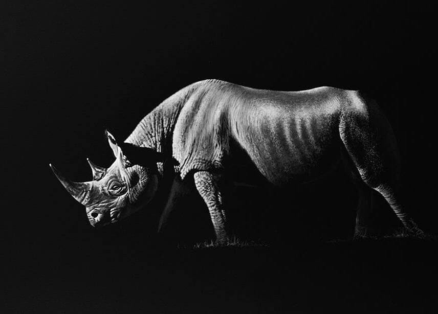 09-Rhino-Richard-Symonds-www-designstack-co