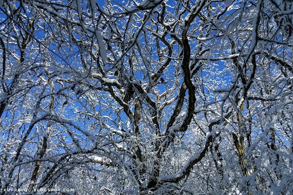 Лесные зимние узоры