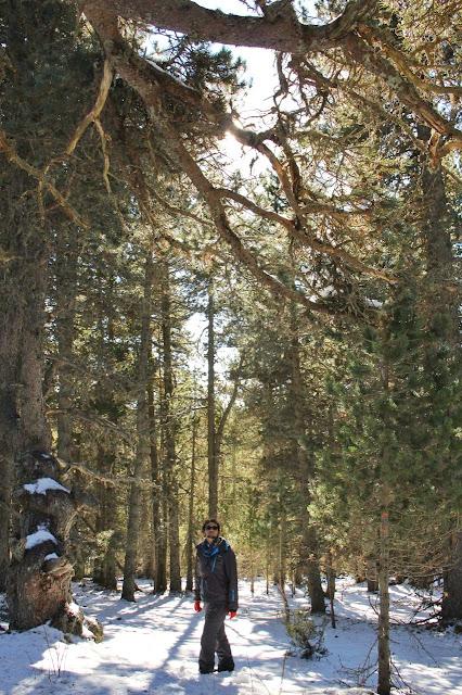 Floresta no Parque dos Animais, no Naturlândia, Andorra.