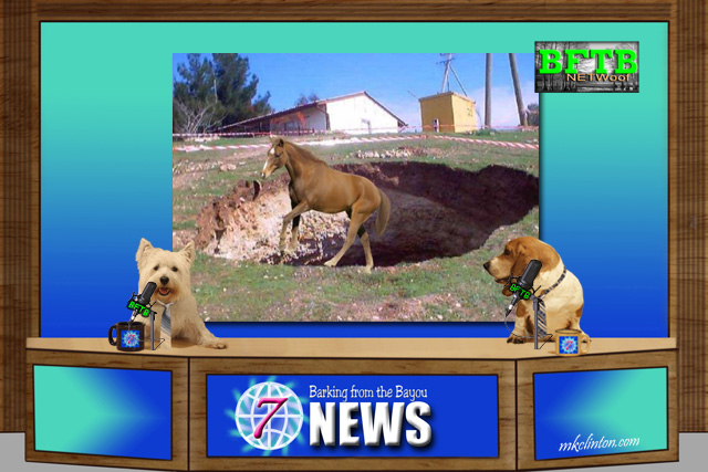 BFTB NETWoof News reports on a horse in a sinkhole