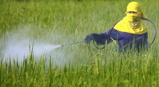 http://tipspetani.blogspot.com/2016/11/daun-mimba-untuk-pestisida-dan-pupuk.html