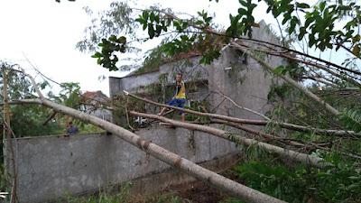 Banyak Pohon Tumbang Di Purworejo Akibat Hujan Angin