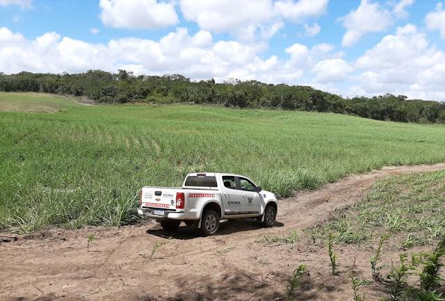 Idema e Ministério Público constatam desmatamento em Extremoz e Pedro Velho