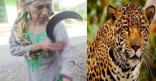 मंडी: हिमाचली दादी दिखाया अपना दम,  दराटी लेकर तेंदुए से भिड़ गईं