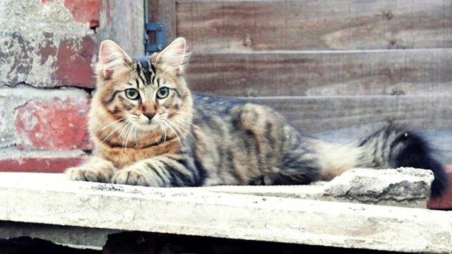Wajah Comel Tetapi Kucing Ini Mempunyai Rekod Sebagai Pencuri Yang Hebat