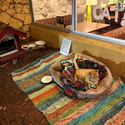 A restaurant with something nice for a single cat that a friend needs