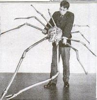 Cangrejo Gigante Japonés