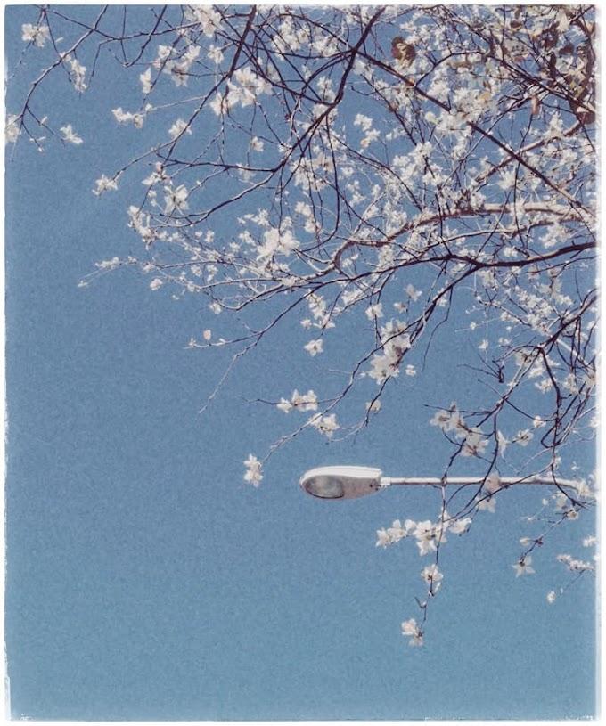 """Phượt Đà Lạt - Ngắm những bông hoa """"tuyết trắng"""""""