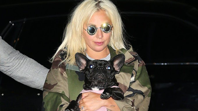 Lady Gaga's dogs found safe after violent kidnapping