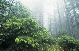 Θετικά στοιχεία αλλά και έντονη ανησυχία για τις προστατευόμενες περιοχές
