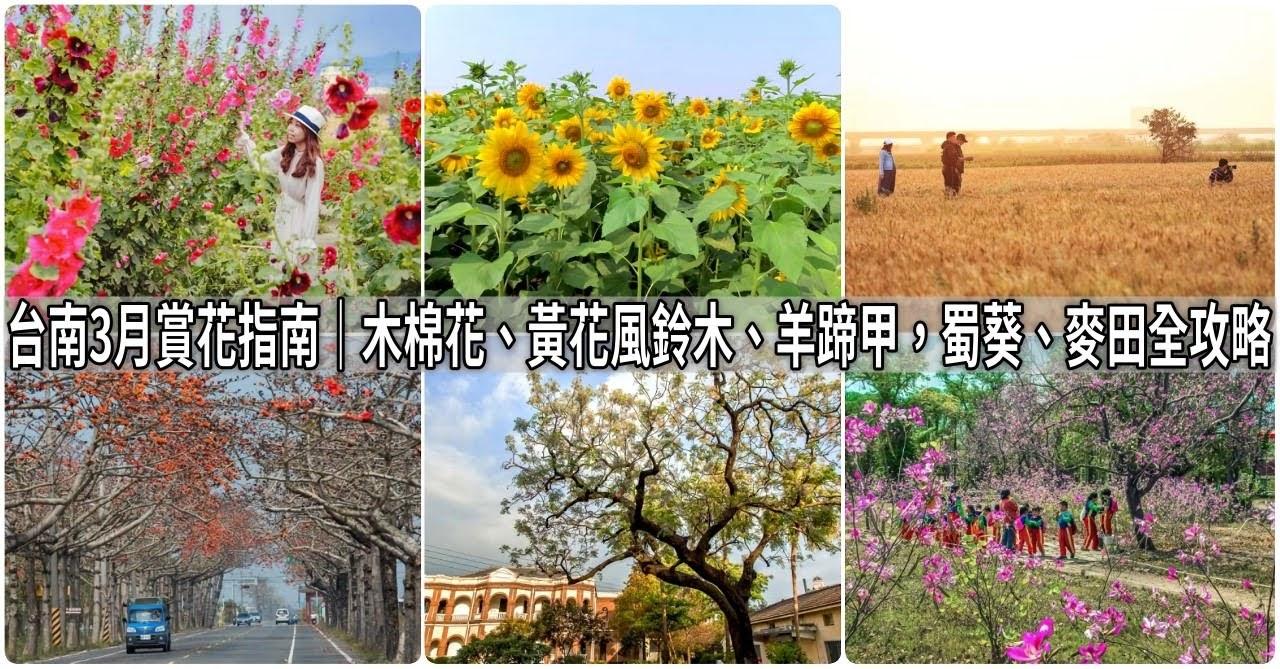 台南3月賞花指南|木棉花、黃花風鈴木、羊蹄甲,蜀葵、麥田全攻略