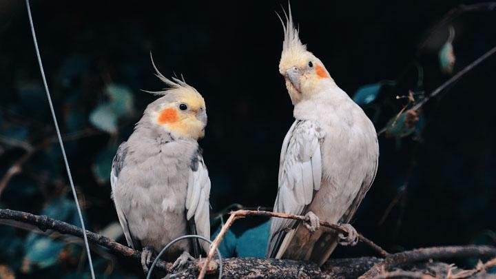 wild bird diseases