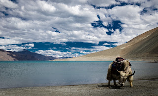 Leh-ladakh-road-trip-4