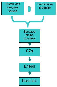 Gambar Perubahan bentuk senyawa nitrogen