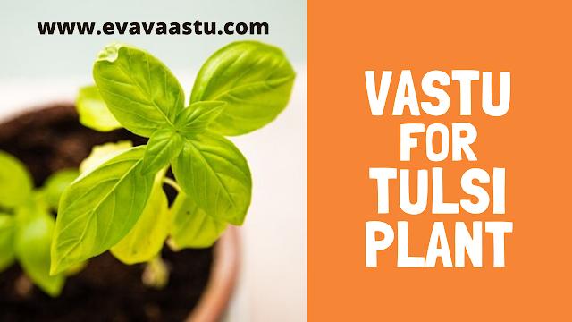 Vastu Tips for Tulsi Plant