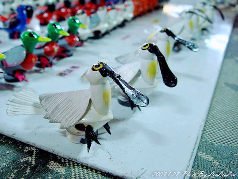 台南七股賞鳥趣 黑面琵鷺野生動物保護區