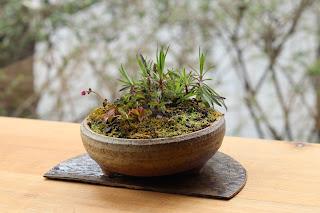 半月の陶板の上の草もの盆栽