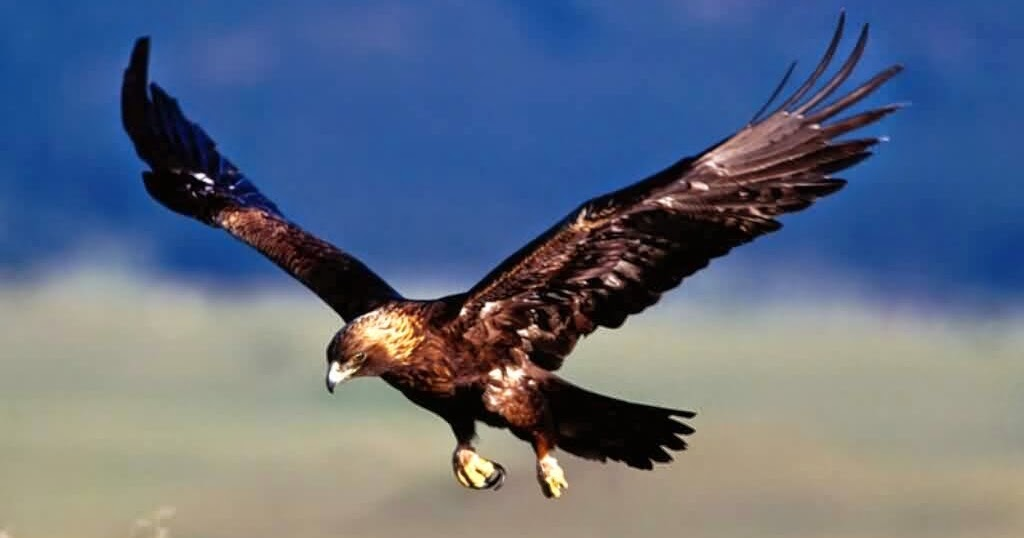 Burung Burung Yang Sangat Berbahaya