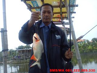 Essen Untuk Ikan Bawal