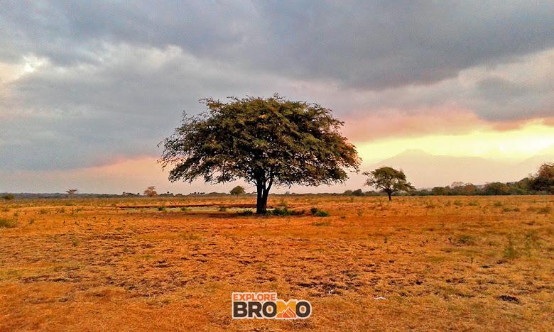 savana bekol litte africa