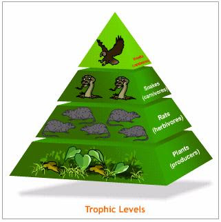 ocean ecosystem food chain diagram traxxas t maxx transmission zhomeschooler's resources: apologia biology, module 10, ecology