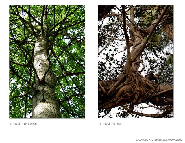 Suomalaisen puun ja intialaisen puun alla