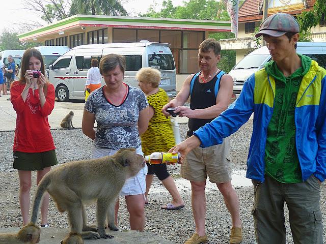 Обезьяны в Таиланде (Monkey in Thailand)