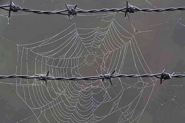 barbwire, cobwebs, Okinawa, rain