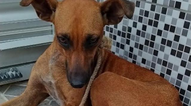 Homem é preso suspeito de estuprar cadela em Cacimba de Areia