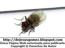 Foto de una mosca por Jesus Gómez