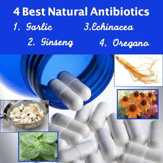 best natural antibiotics jjbjorkman.blogspot.com