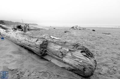 Le Chameau Bleu - découvrir Tofino sur l'île de Vancouver Canada