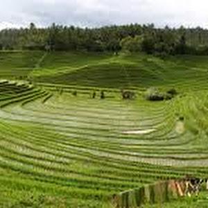 Sistem Pertanian Tropika Adriansyahpaper