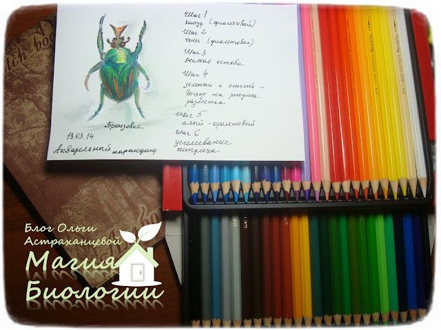 ботаническая-иллюстрация-магия-биологии-акварельные-карандаши-бронзовка