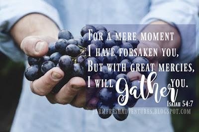 Nature and Verse: Isaiah 54:7