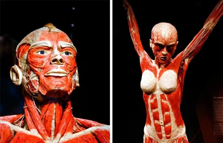 fakta tubuh manusia