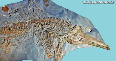Gigantikus méretű halgyíkok úsztak egykor a tengerekben