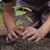 ZPP Meio Ambiente: Os benefícios do plantio de árvores para o meio ambiente