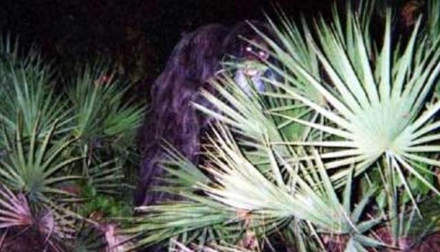 Berikut Enam Foto Mengandung Misteri Yang Masih Belum Terpecahkan
