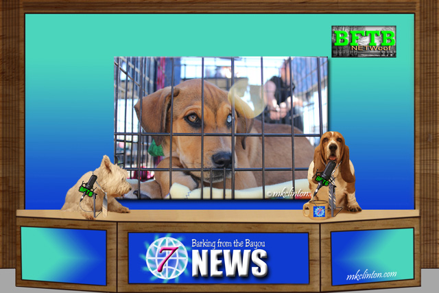 BFTB NETWoof News reports on selling rescues in pet stores