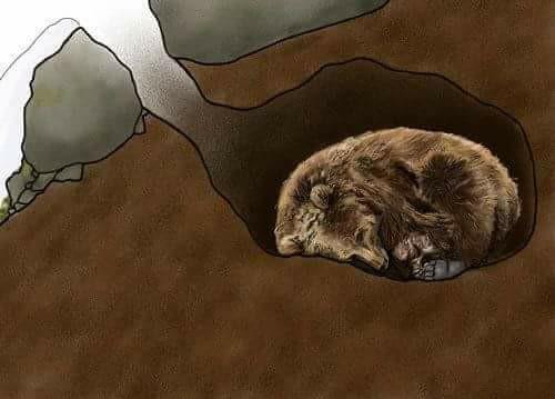 هكذا يبدو وكر الدب