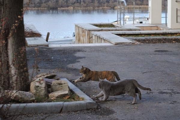 кошки бегут