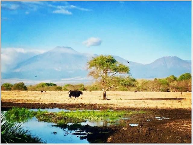 Taman Nasional Baluran Situbondo;10 Top Destinasi Wisata Situbondo;
