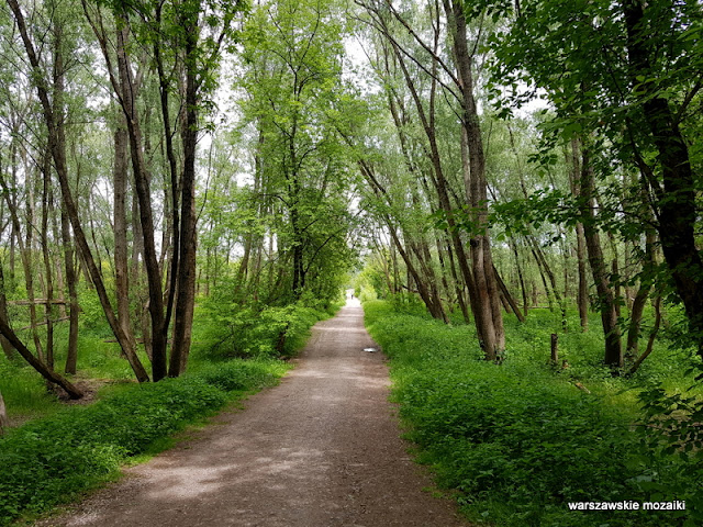 Warszawa Warsaw Bielany Młociny teren zielony parki drzewa las