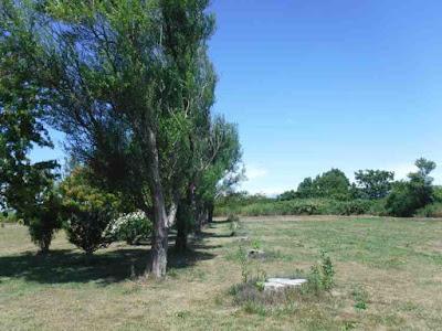片側の列が伐採されたヤナギ並木