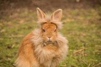 tips ternak kelinci, tips ternak kelinci pedaging, ternak kelinci pedaging, cara ternak kelinci pedaging, kelinci pedaging, ternak kelinci pedaging modern, kelinci